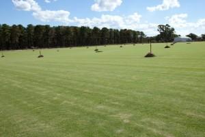 Joondalup Turf Farm - Winter green grass lawn
