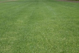 Joondalup Turf Farm - Quality lawn suppliers in Perth
