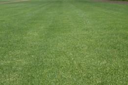 Joondalup Turf Farm - Quality lawn suppliers in Perth