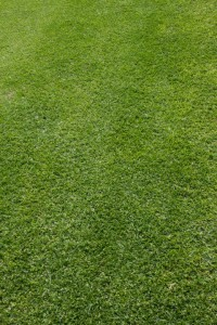 Joondalup Turf Farm - types of grasses to suit your needs