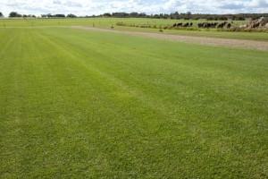 Kikuyu commercial Grass