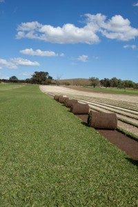 Joondalup Turf Farm - quality rolls of turf for your garden