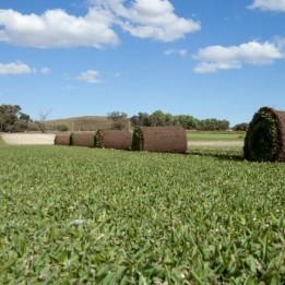Joondalup Turf Farm - Soft Buffalo Turf