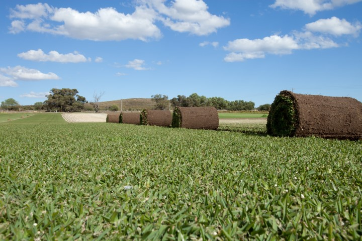 Joondalup Turf Farm - Soft Buffalo Turf
