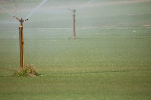 Joondalup Turf Farm - sprinkler system